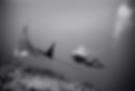 Screen Shot 2020-05-03 at 3.28.26 PM.png