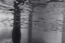 Needlefish under Pier #2 (K-240)