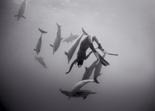 Kimi Werner with Dolphins #2 (B-340)