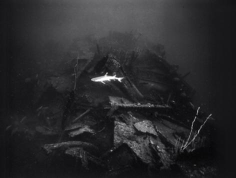 Whitetip Reef Shark over USS Gilliam (K-14)