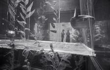 Sunfish, Kaiyukan Aquarium (P-60)