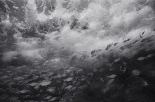 Aholehole in Turbulant Water (A-285)