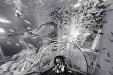Escalator Tube, Hakejima Sea Paradise Aquarium (P-53)