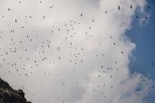Birds, Mokumanamana (NWA-69)
