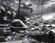 Turtles, Shinagawa Aquarium (P-82)