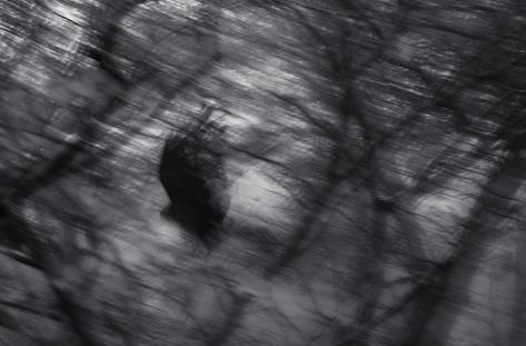 The Swinging Crow, Jeju (JB-32)