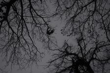 Fluttering Crow, Jeju (JB-79)