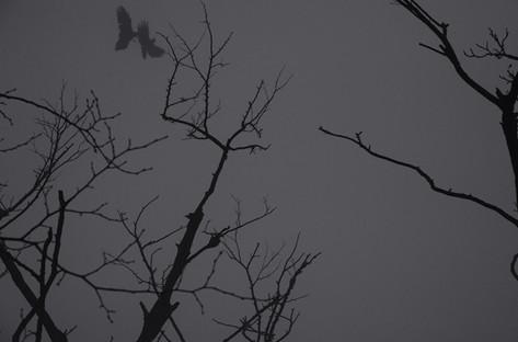 Fighting Crows (JB-71)