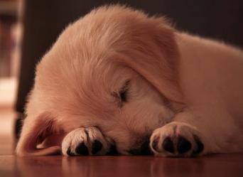 Calgary- Hardwood Floor Refinishing Tips for Pet Owners