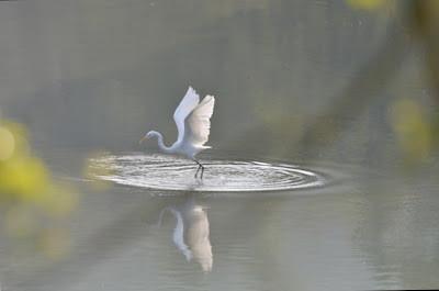 """Lucky Hong Kong Birds 幸福的""""港鸟"""""""