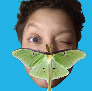 Moth audio