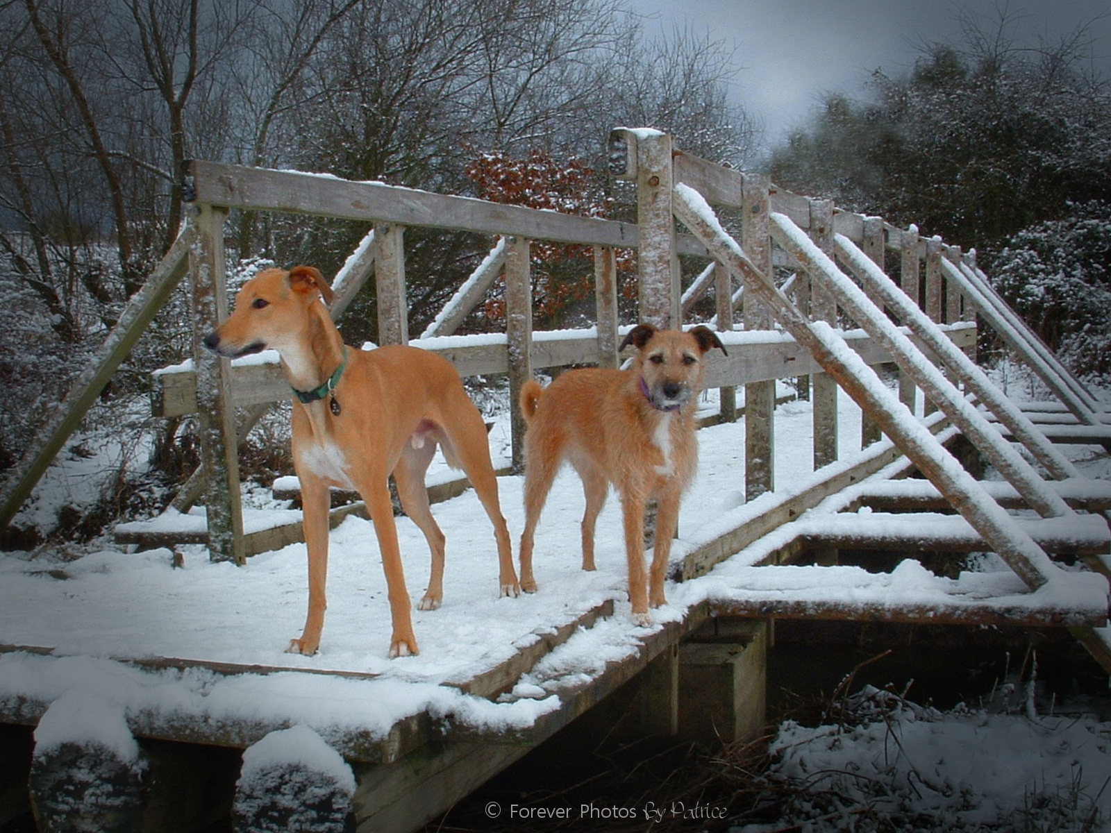 Megan & Monti - Lurchers