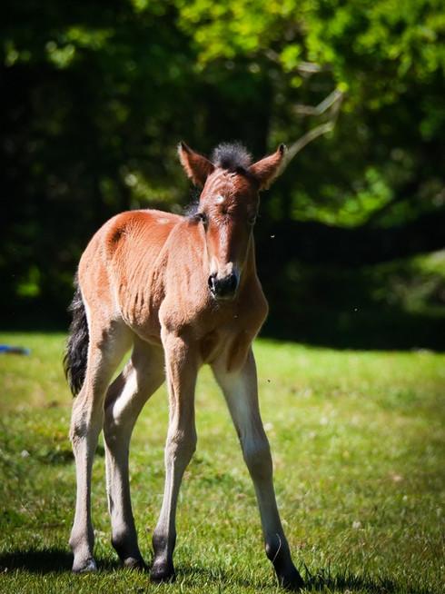 Beautiful Foal