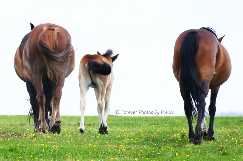 On our way home - Equine Photography