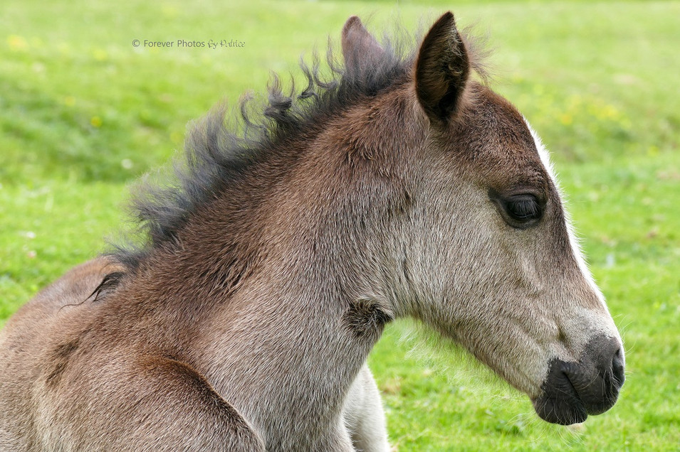 Too Cute / Young Foal