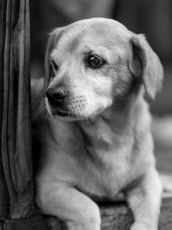 Puppy Love - Pet Photography