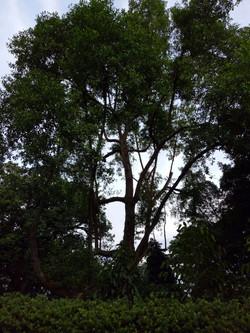 The 'Tree Friend'