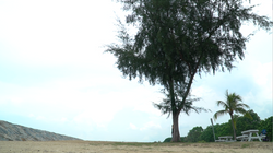 The Huggable Tree