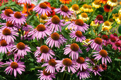 native-plants-for-your-michigan-garden-1