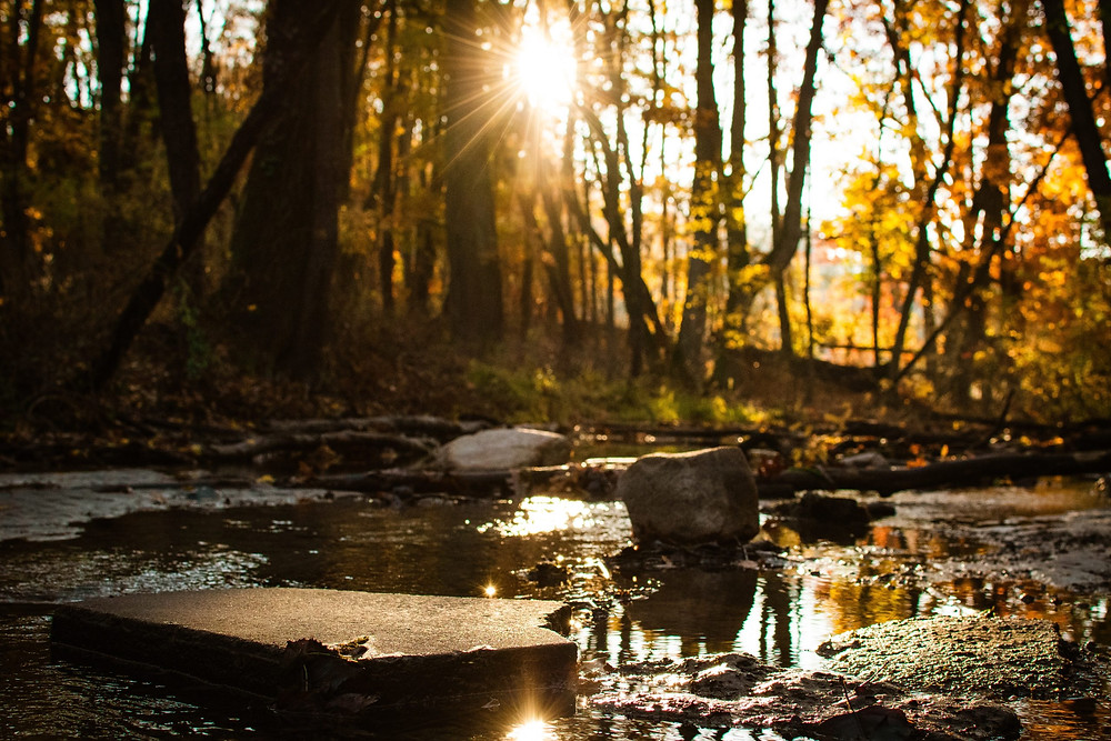 Image of a small stream with the sun shining through golden leaves and trees.