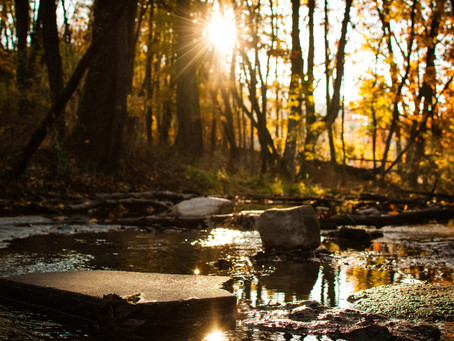 Phosphorus Reduction Auction in the Kalamazoo River Watershed