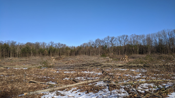 After clear cutting