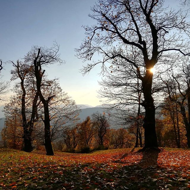 Chesnut Forest Malcantone
