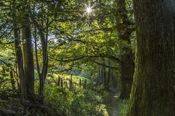 Trail close to Rifugio Nel Bosco