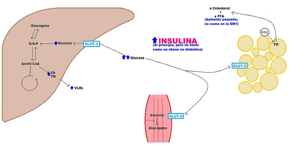 ¿Cómo están involucradas la glucosa y la insulina en la diabetes?
