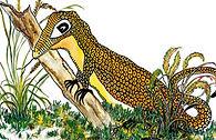 the-lizard-gang-2.jpg