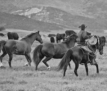 How is it possible for 3 cowboys to herd a thousand cattle?
