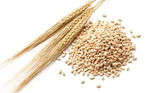 Barley is a healthy ingredient in Holista Low GI Pasta