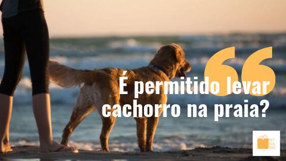 Pode levar cachorro na praia?