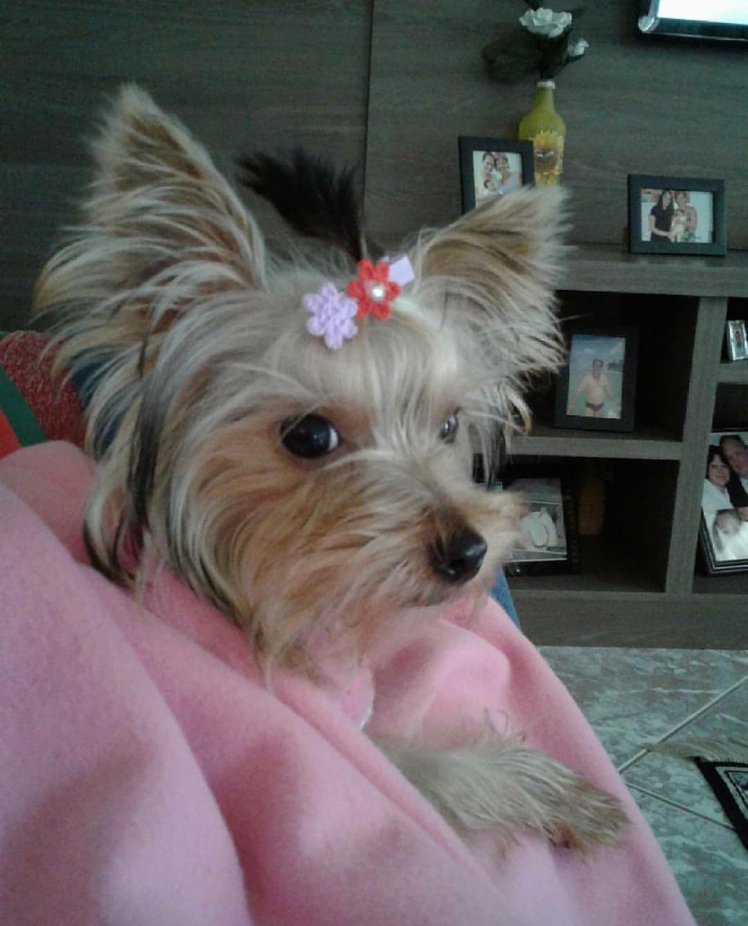 Belinha Vicente