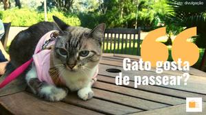 Gato gosta de passear de coleira no Parque do Ibirapuera