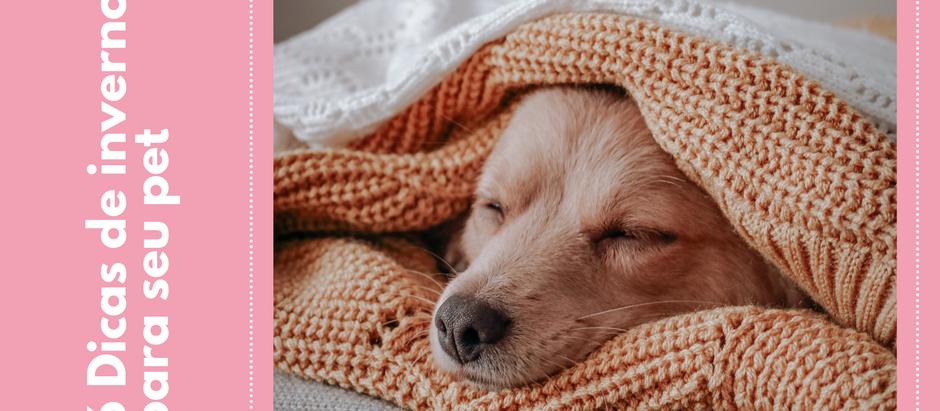 6 dicas de inverno para seu pet