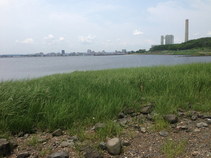 Building Resilient Ecosystems in New Haven, Connecticut