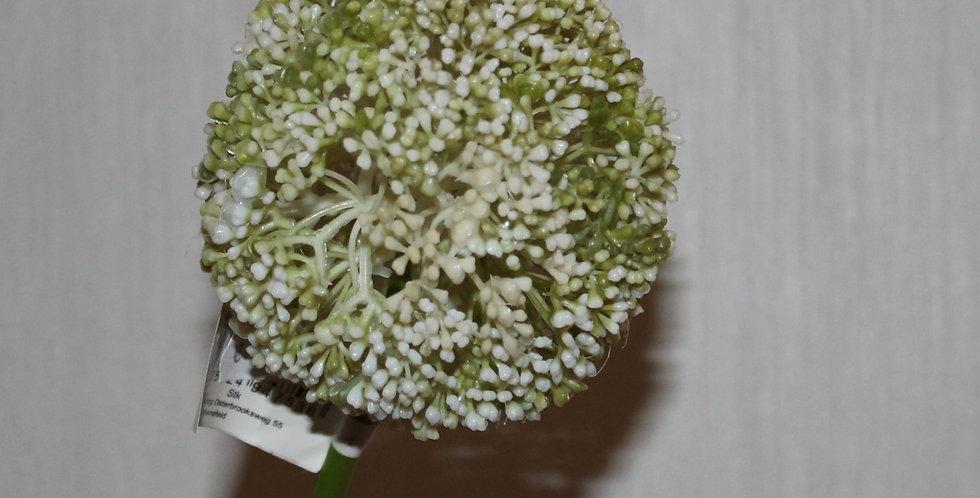 Seidenblume Alium Weiß