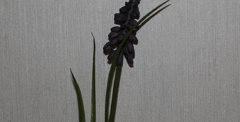 Seidenblume Muscari Dunkel Blau