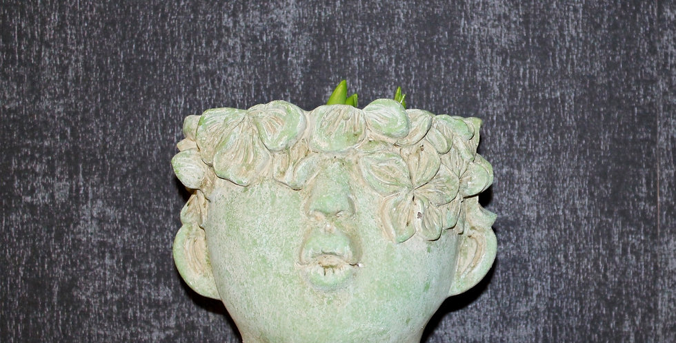 Topf Blütenkopf Grün