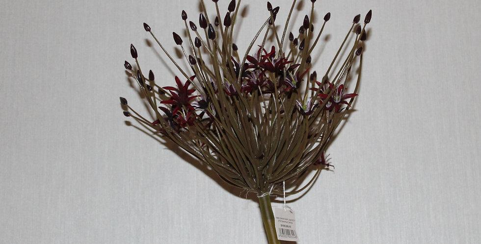 Seidenblume Allium bordoxe Sprey