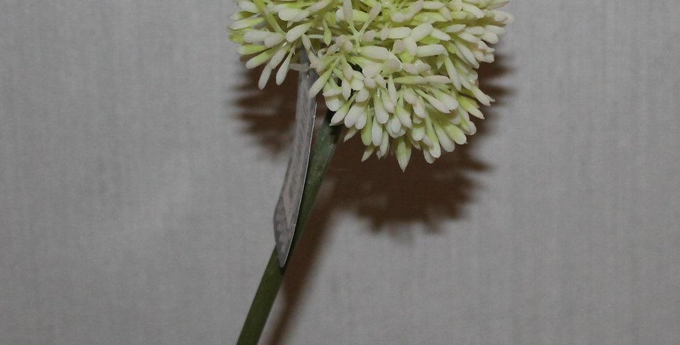 Seidenblume Alium Klein Weiß