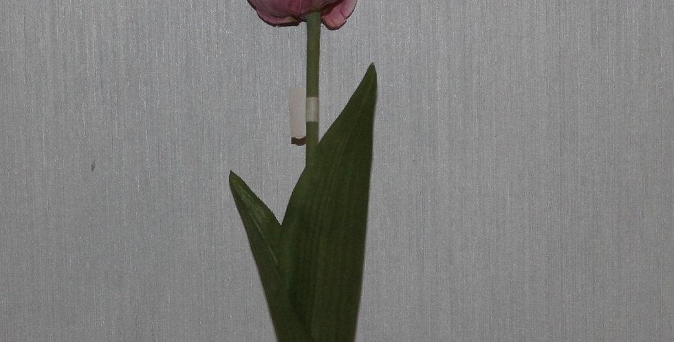Seidenblume Tulpe Fransenrand Rose
