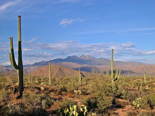 Sonoran Desert Near Tucson Arizona