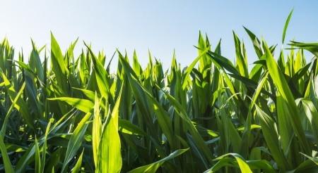 Fintech Hotspot Surrounded by Omaha Cornfields