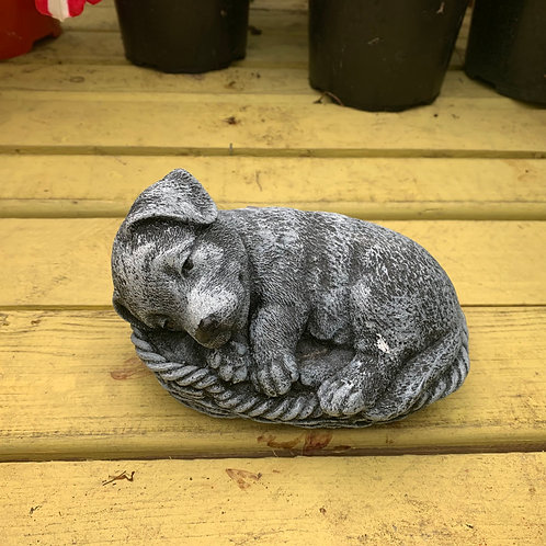 Labrador in basket