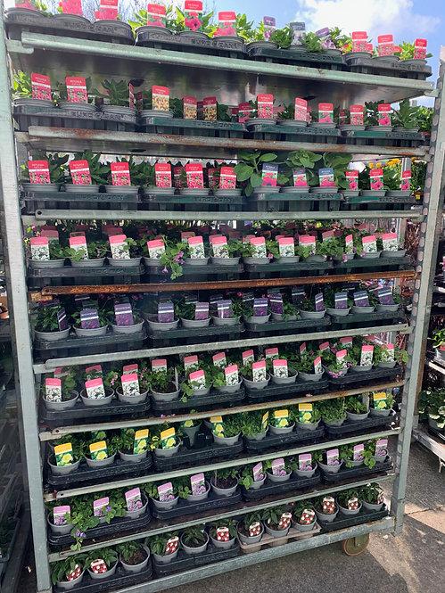 6 x Basket plants