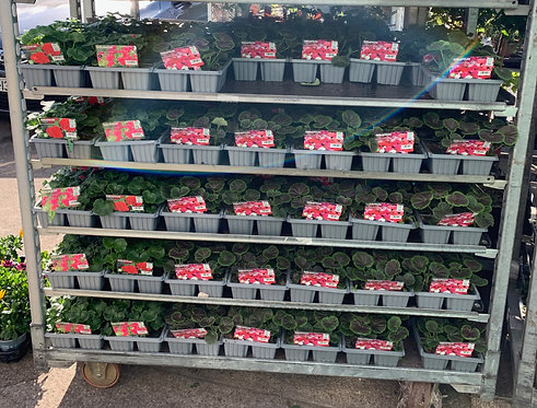4 x 6 pk Bedding Plants for €10
