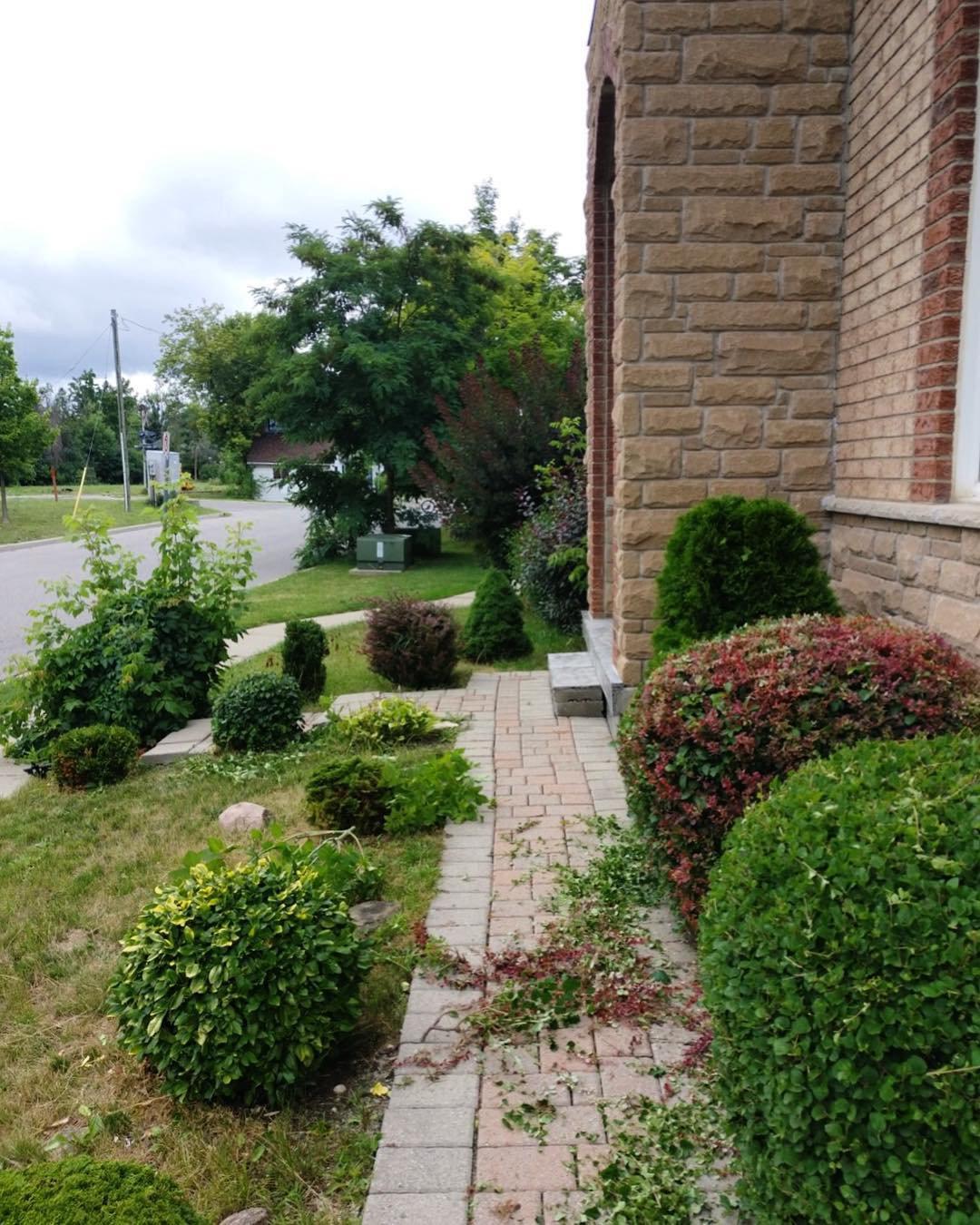 Tree/Shrub/Hedge Care
