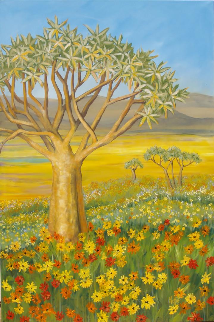 Namaqualand C